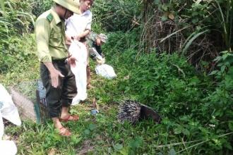 VQG Phong Nha - Kẻ Bàng: Hoạt động hưởng ứng ngày Quốc tế Đa dạng sinh học, ngày Môi trường thế giới, ngày Đại dương thế giới, Tuần lễ Biển và Hải đảo Việt Nam năm 2019